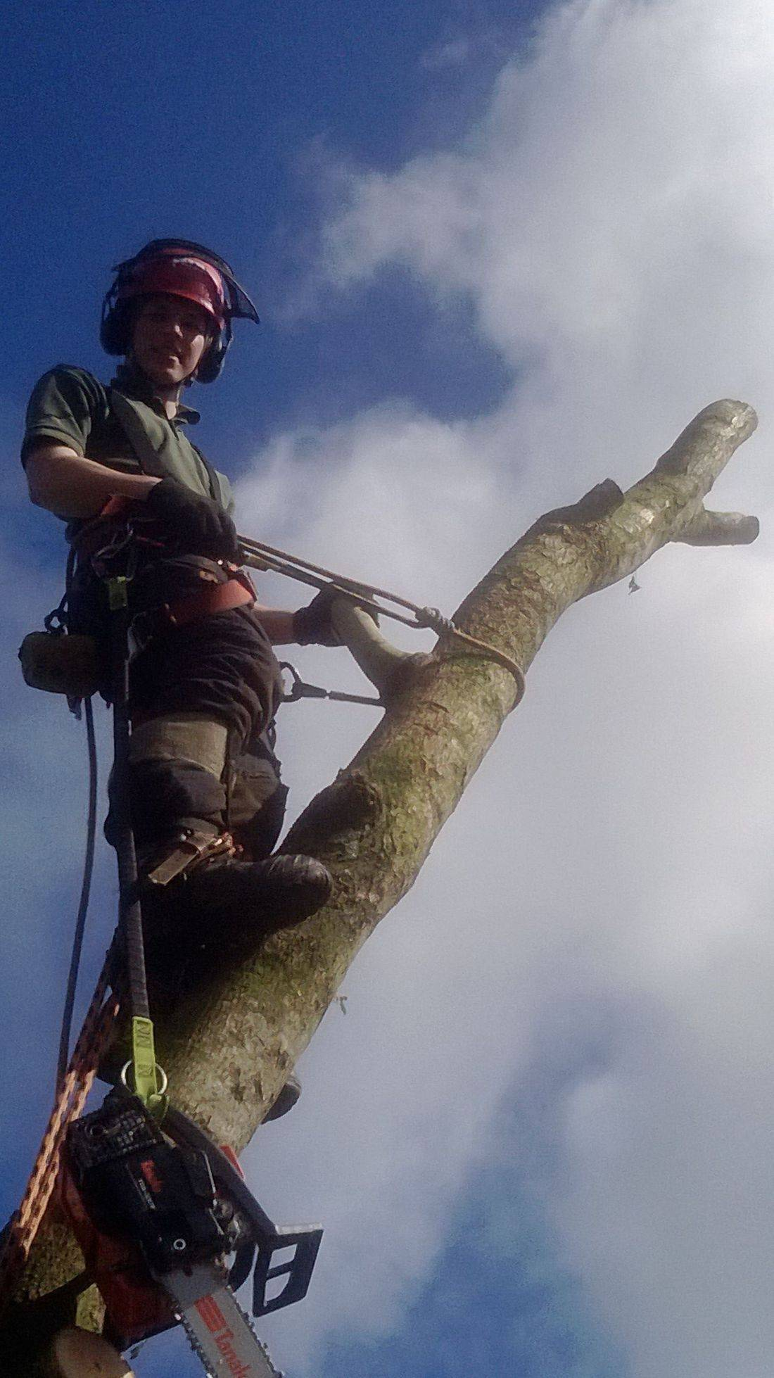 Barnstaple Tree Surgeon