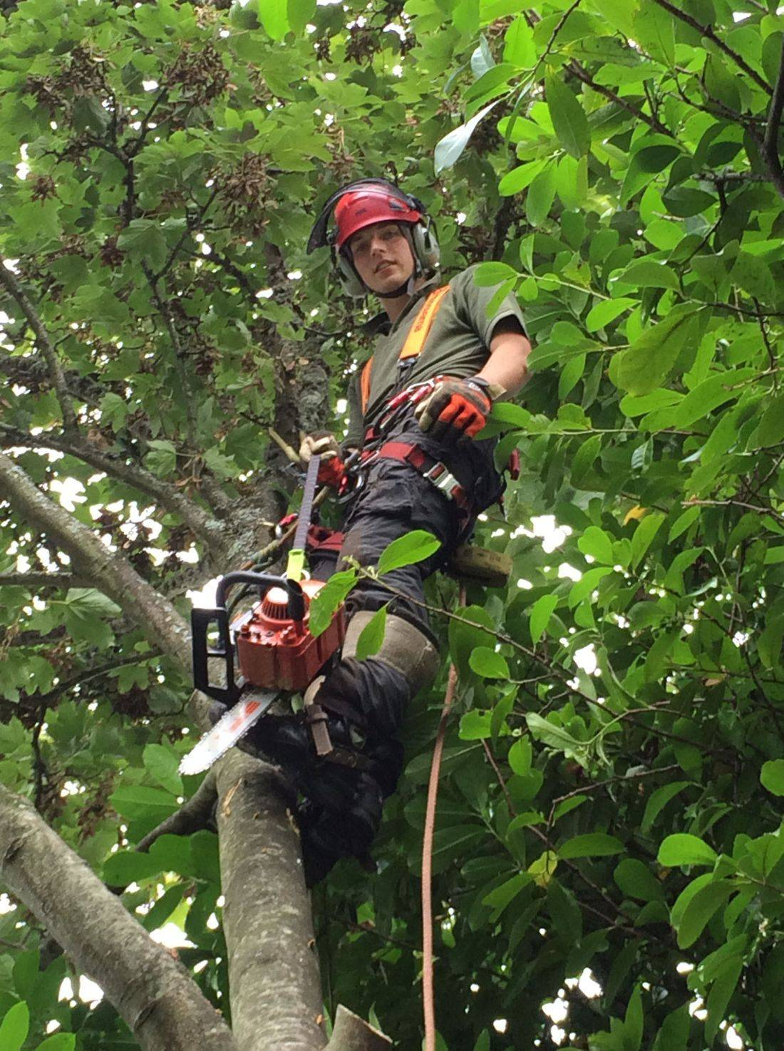 Exmoor Tree Surgery