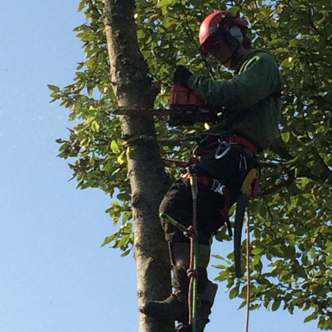 Tree Surgeon Barnstaple