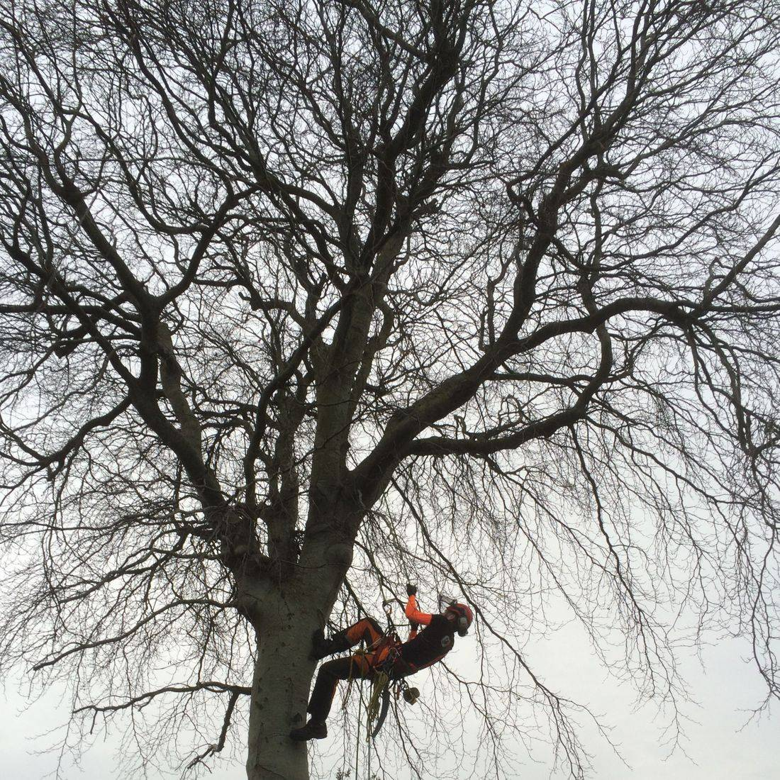 Tree Services Barnstaple