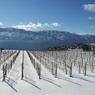 Kelowna Winter Wine Tour