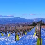Ice Wine Tours Kelowna