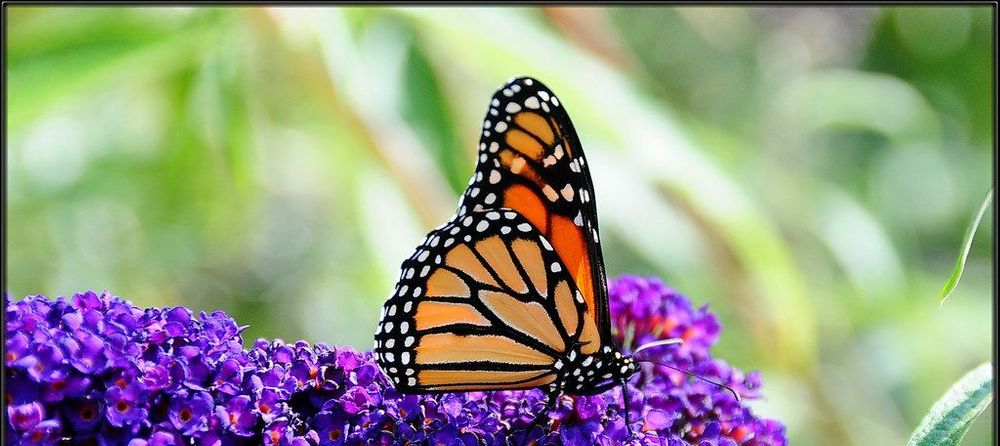 Like the Butterfly's birth in Spring, revitalize your skin care routine with locally made Anti-Aging Skincare & the finest ingredient Soaps in the Hudson Valley