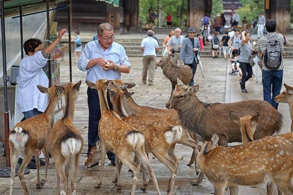 Deer, japan, war is my business, wimb