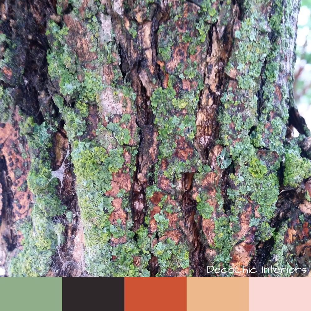 mossy mood, color inspiration, moss, green, brown, orange, bark, black, peach