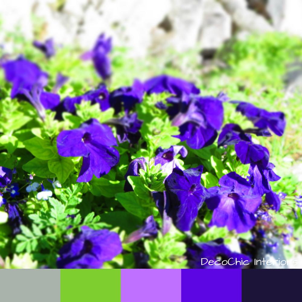 petunias in the sun, color inspiration, purple, flower, sun, sunshine, summer, green