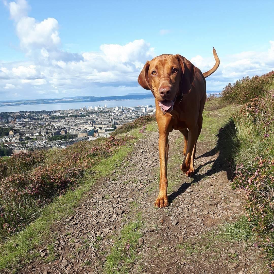 Dog walking, Edinburgh, Dog, holistic, puppy, pet, training, sitting, walking, pet adventures