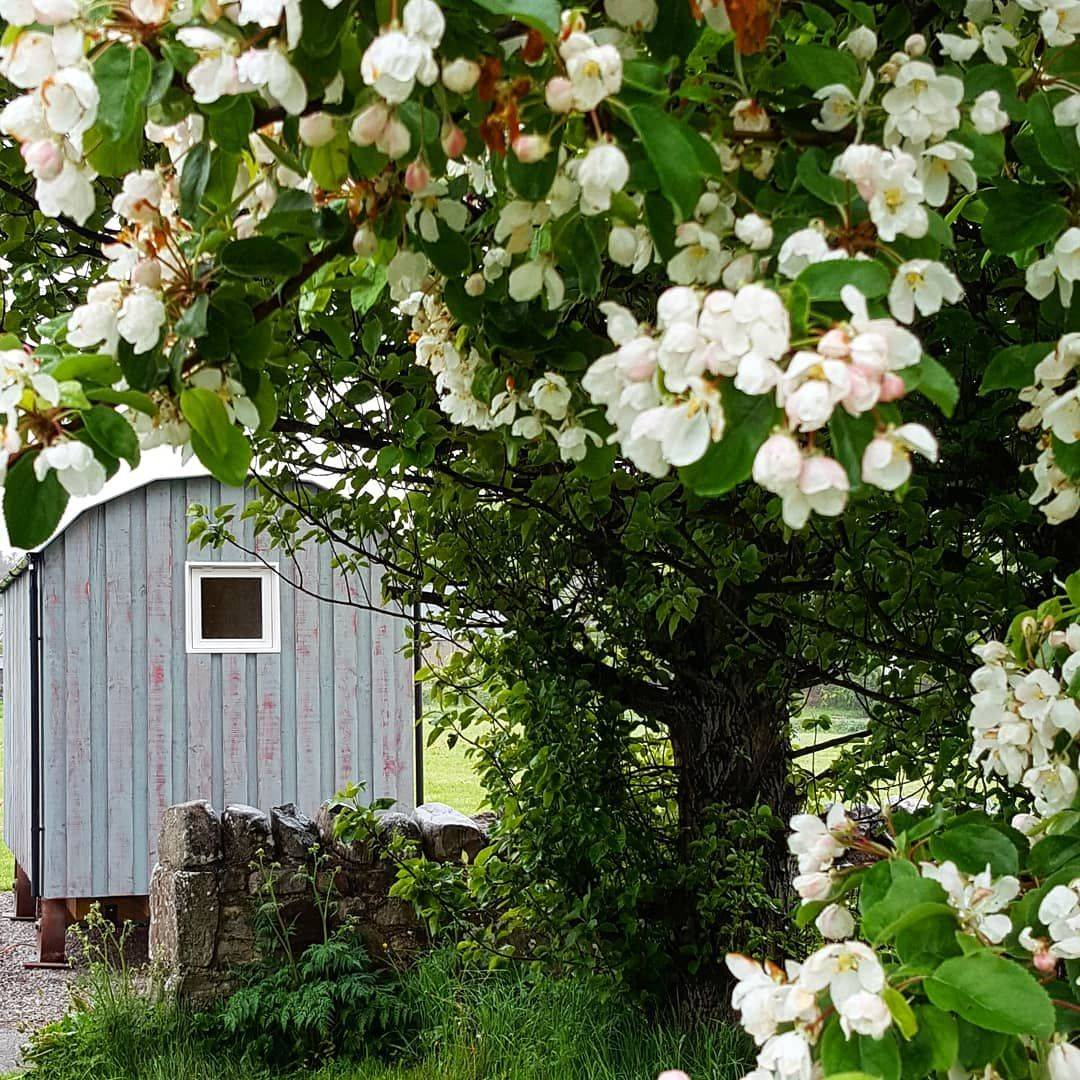 Shepherds Hut in the country side