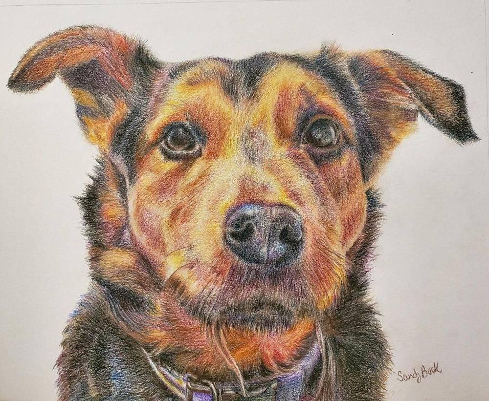 sandy bock, pet portrait, portrait artist, custom portrait, portrait illustration, colored pencil, portraits
