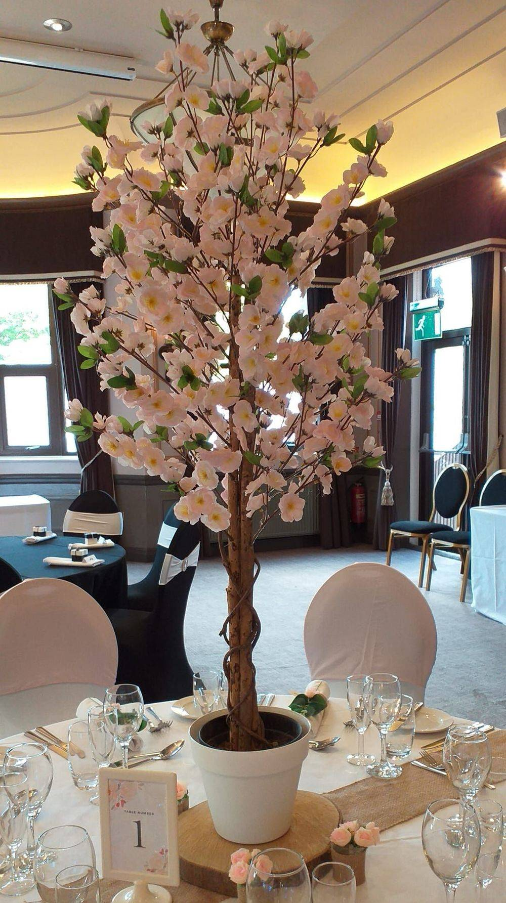 Blossom Tree Hire, Surrey, Hampshire