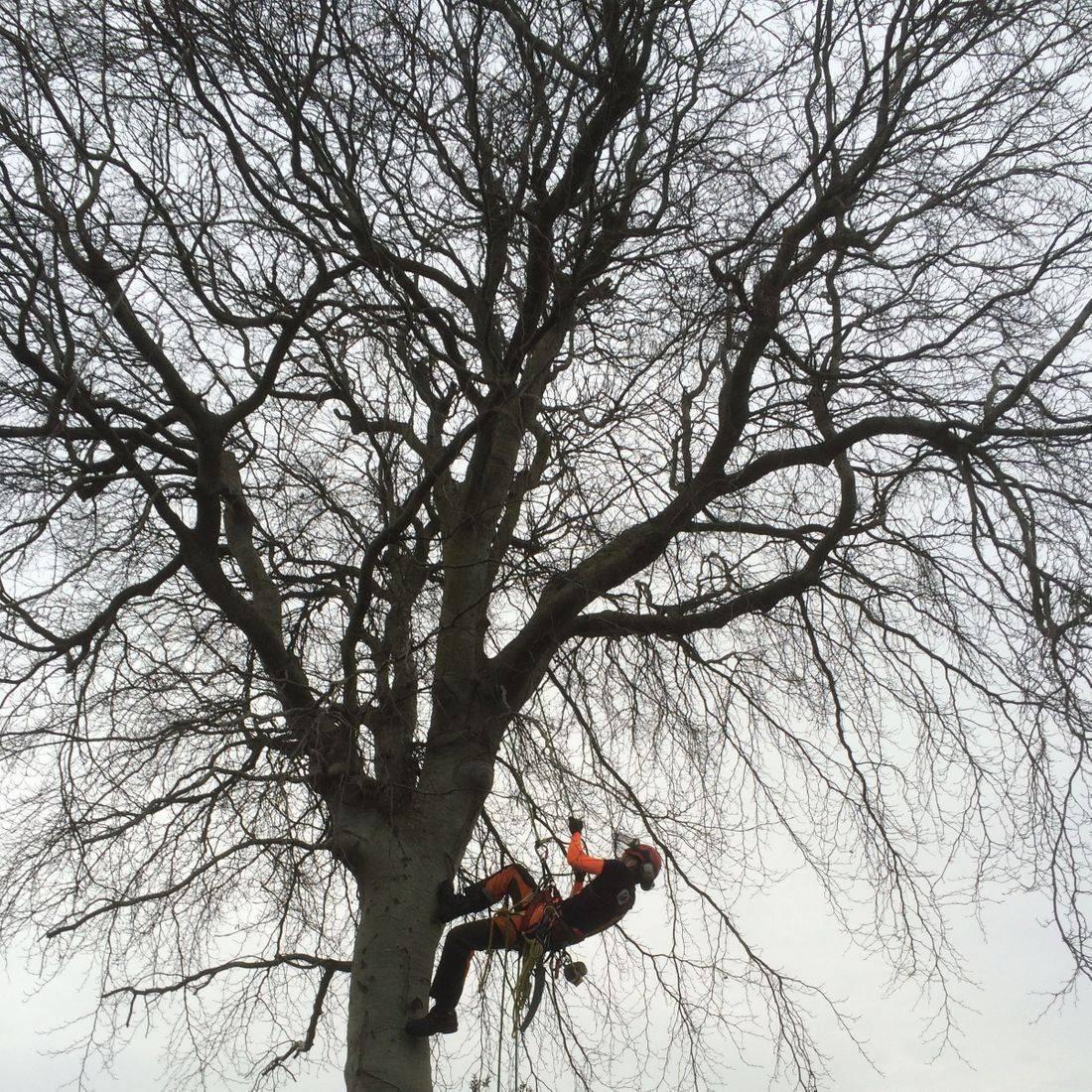 Tree Services North Devon