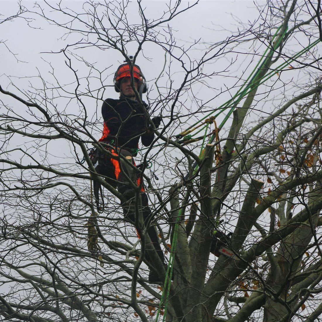 Tree Surgeon North Devon