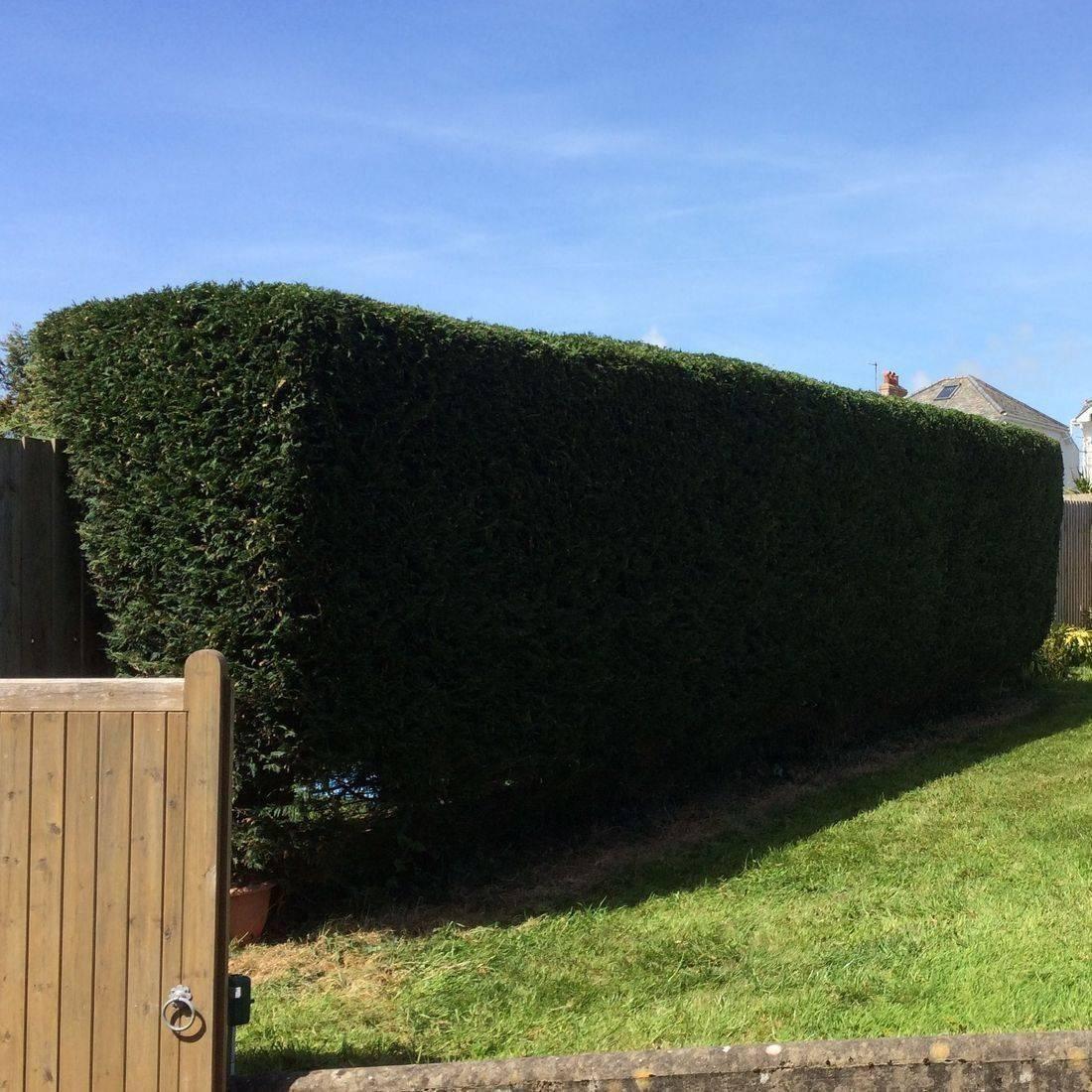 Tree Services Bideford