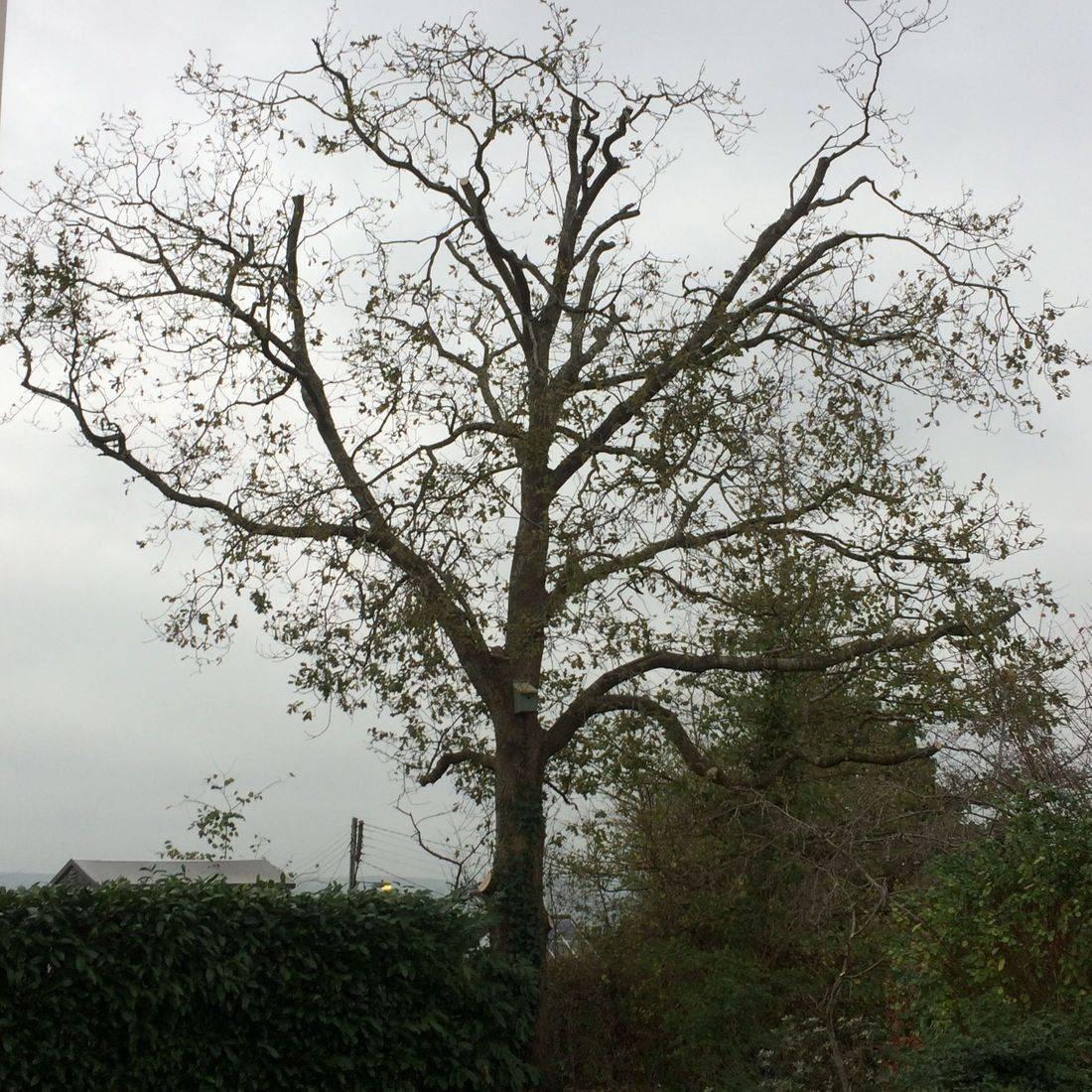 Tree Removal Bideford