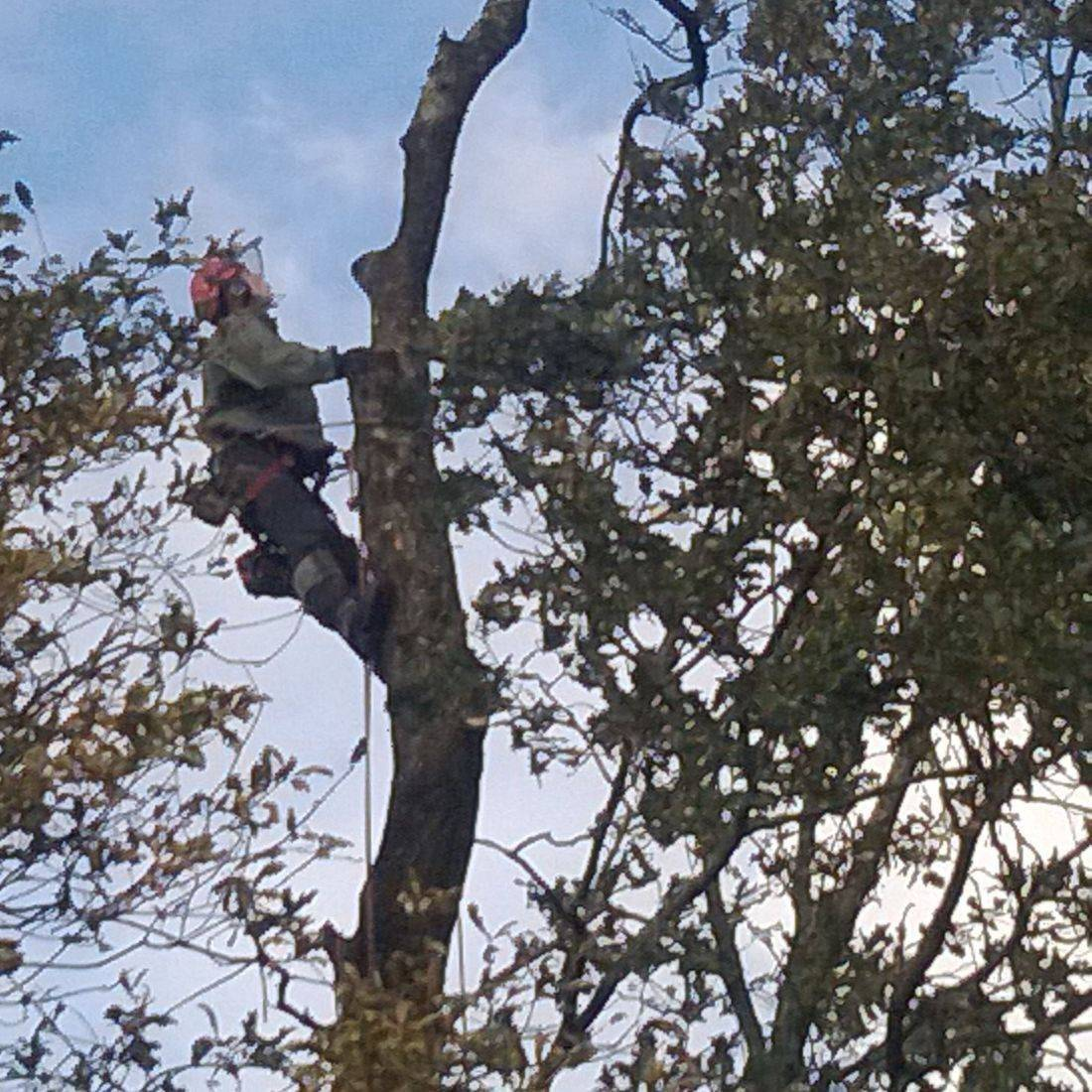 Tree Services North Devon