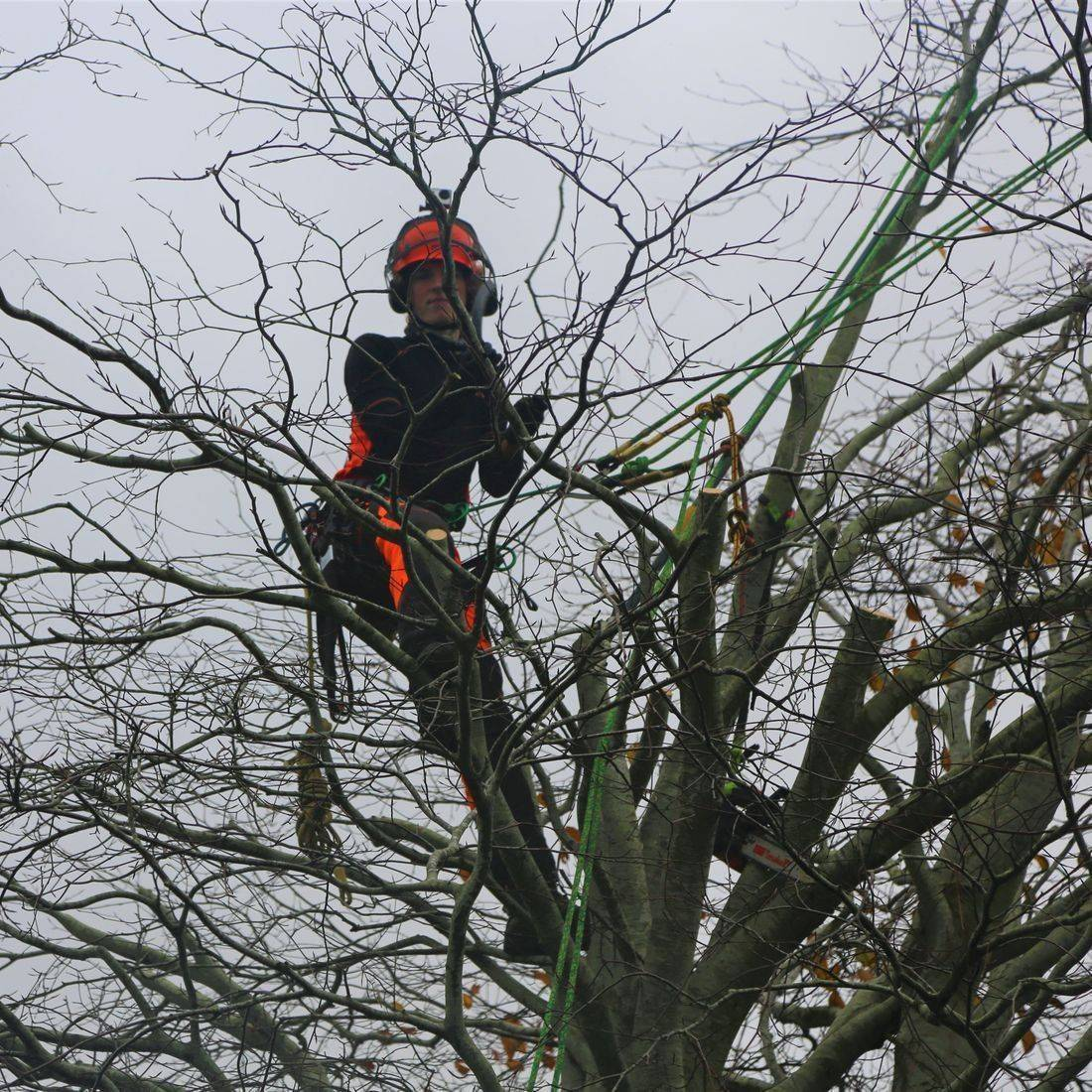 Tree Surgeon North Devon