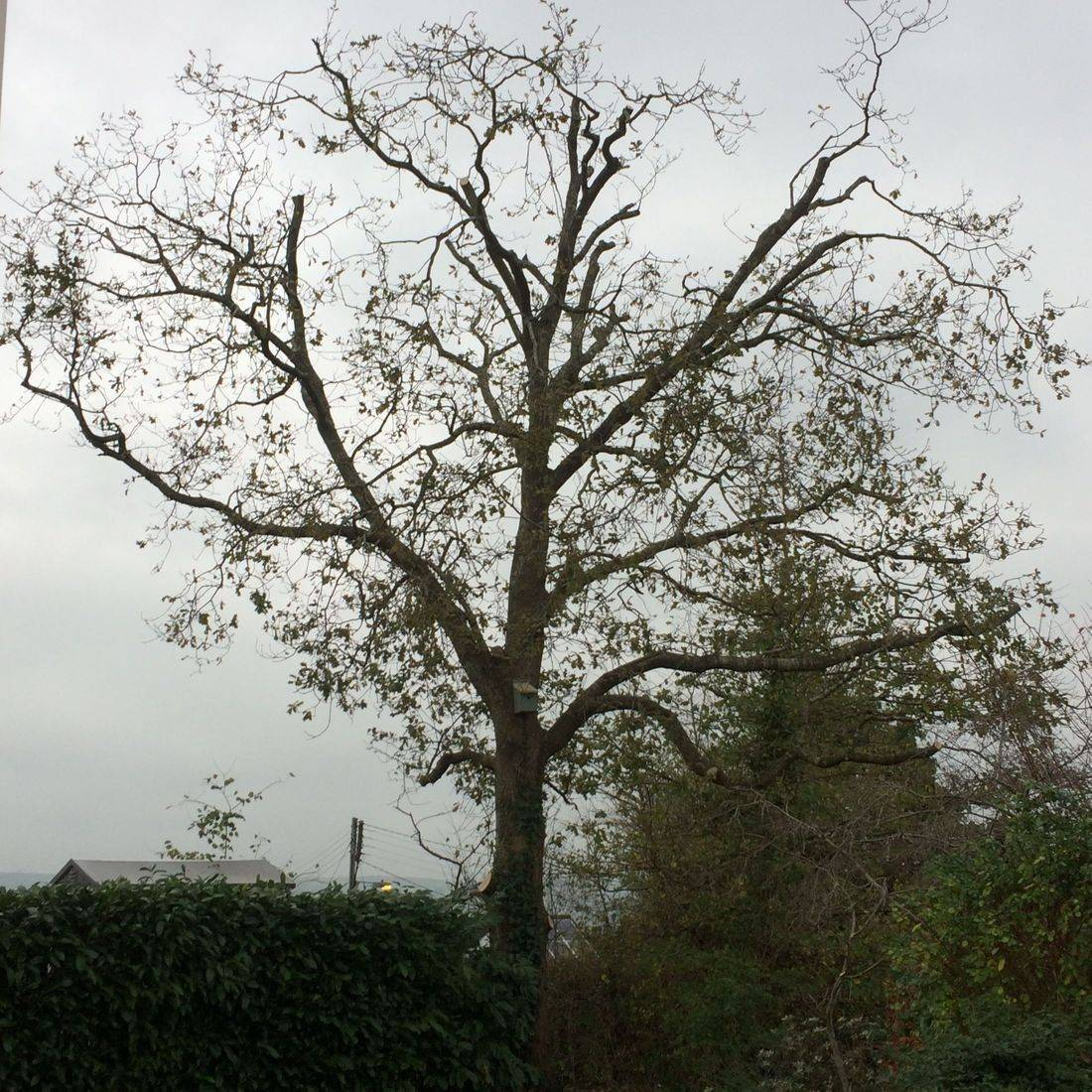 Tree Removal Bideford