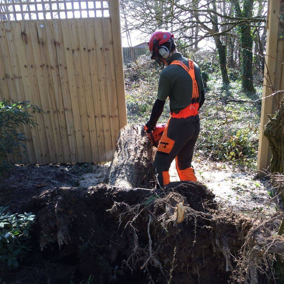 Tree Felling Torrington