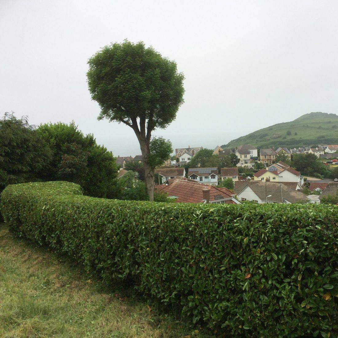 Hedgecutting Bideford