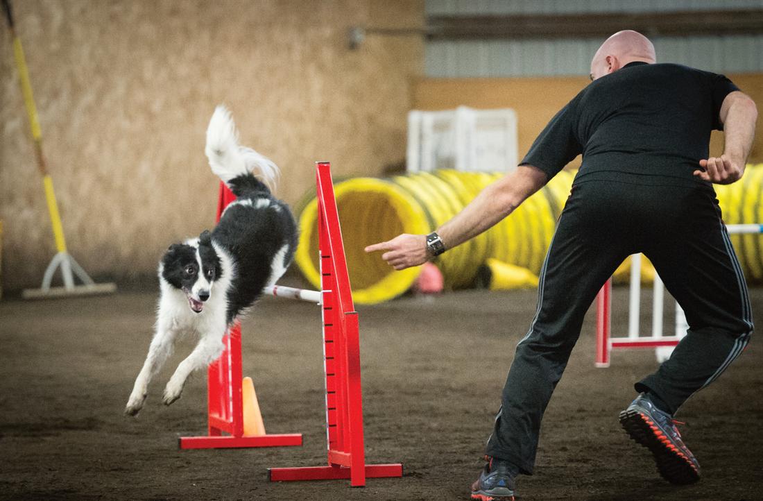 Stephane Lafond and Chronos doing agility.