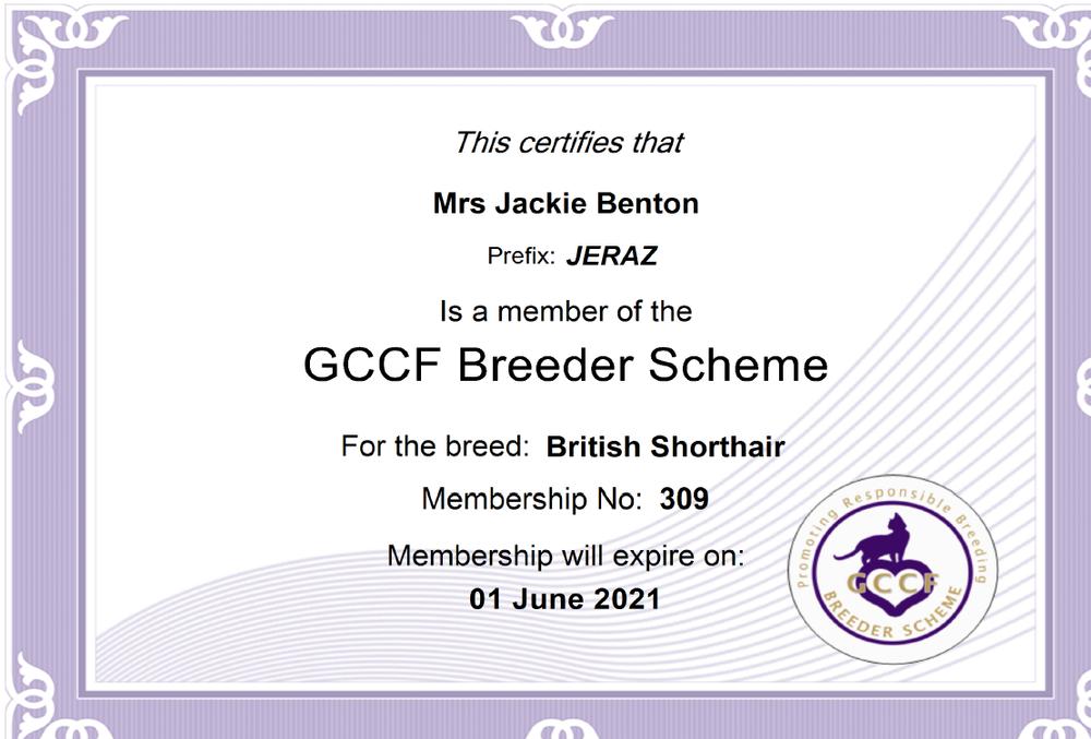 Jeraz British shorthair Member of gccf breeders scheme