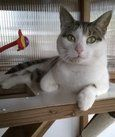 Cattery guest