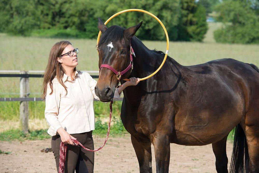 Schnuppercoaching mit Pferden