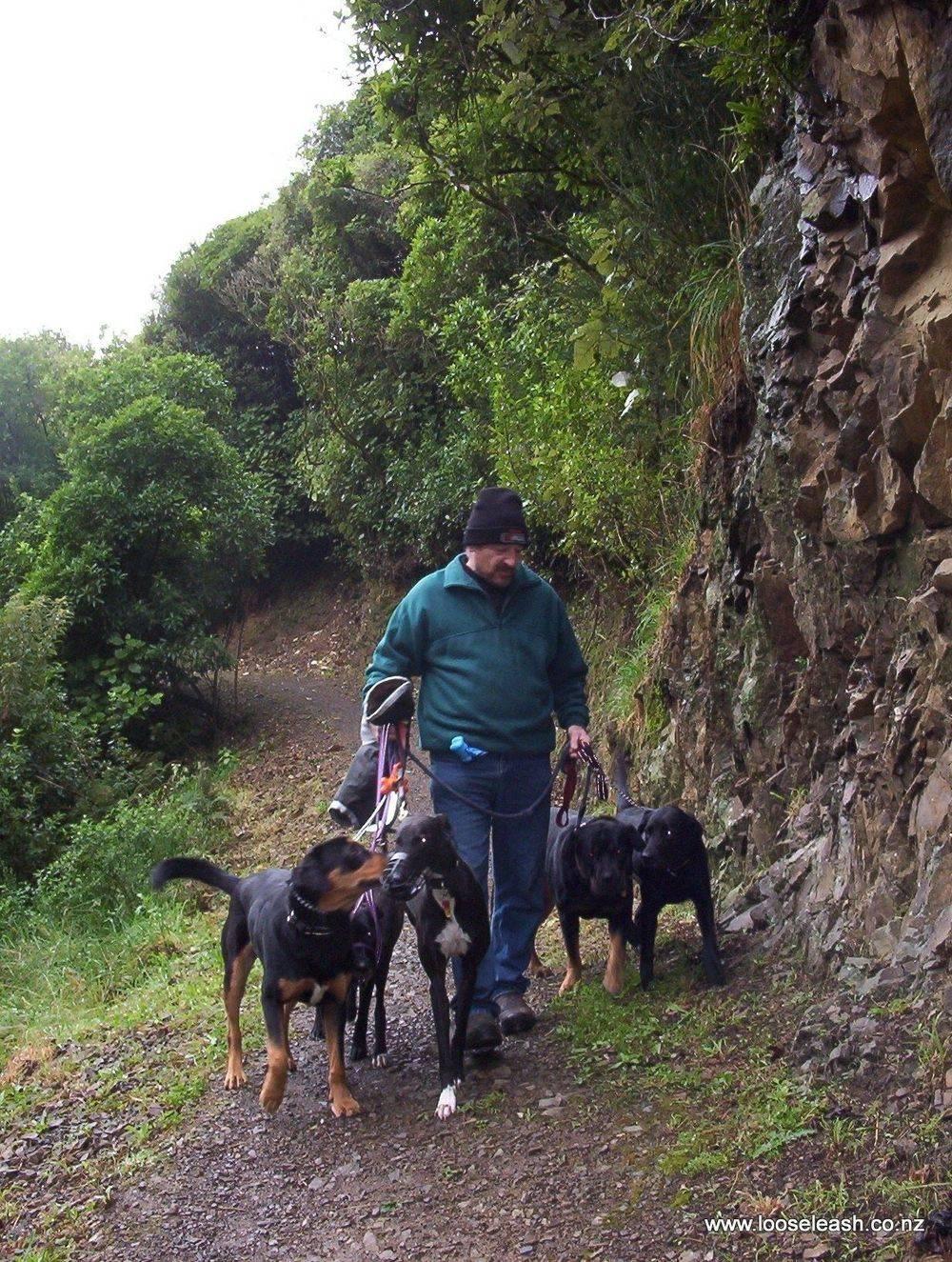 Newlands Dog Walker walking dogs along Lawsons Track, Seton Nossiter Park