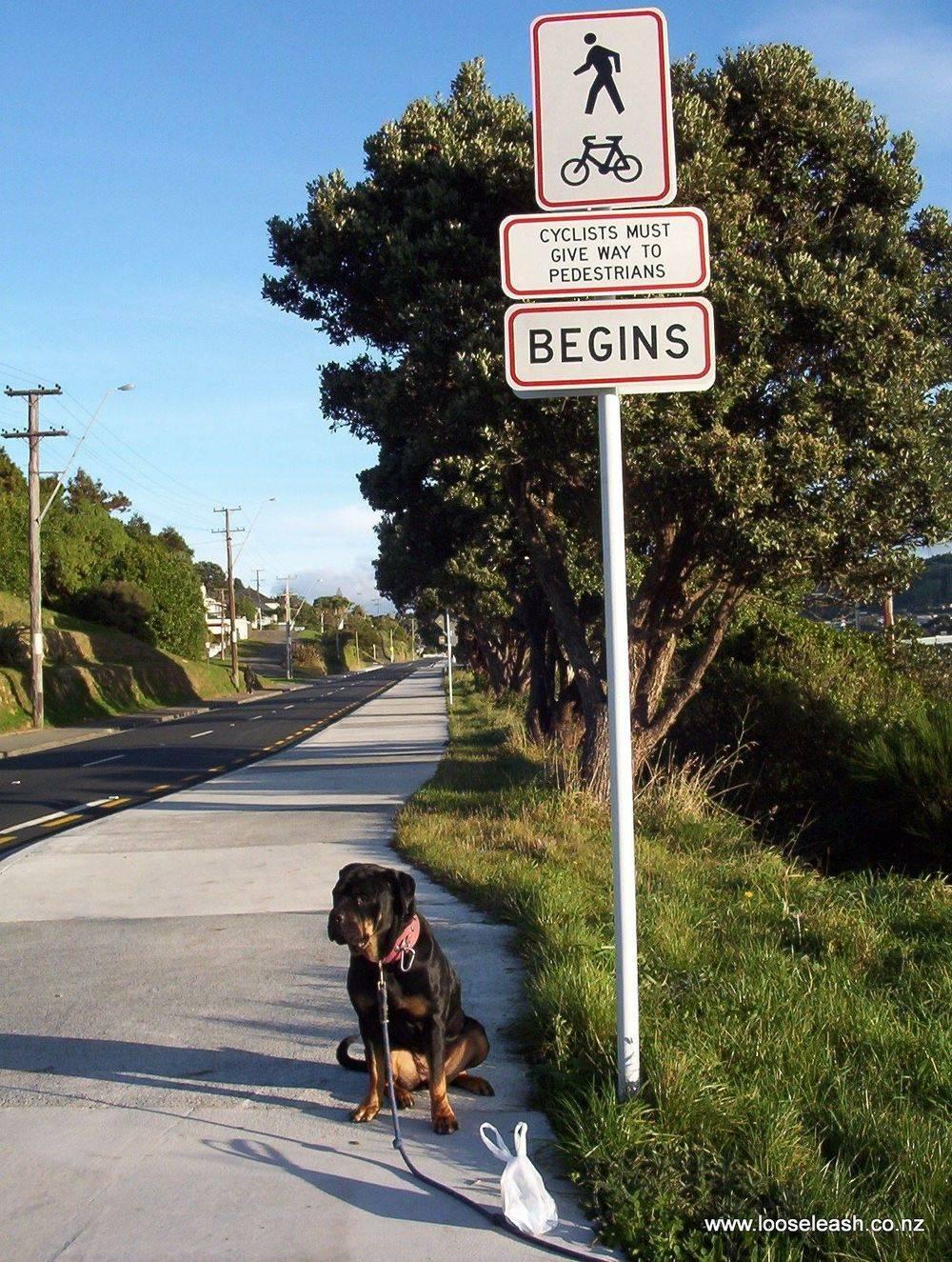 Newlands Dog Walker Dog Walking on the Tawa Shared Pathway - cycle and walkway. walkwayTawaIzardNgaio 1033