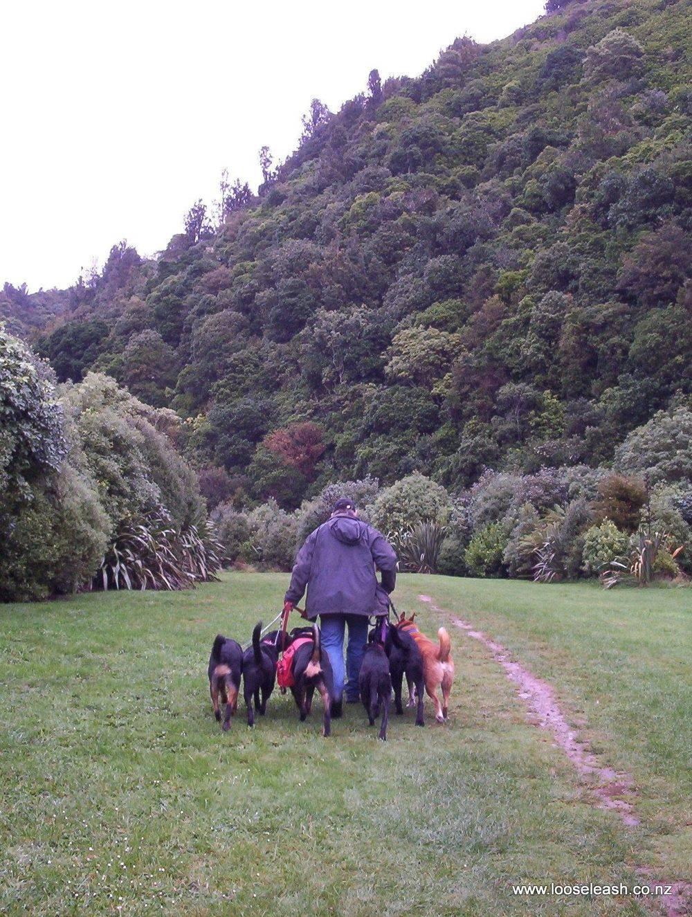 Newlands Dog Walker walking dogs at Otari Wiltons Bush Reserve Ngaio