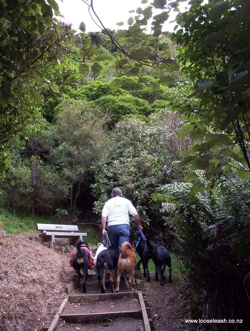 Johnsonville Dog Walker and dogs walking up the steps at Khandallah Park