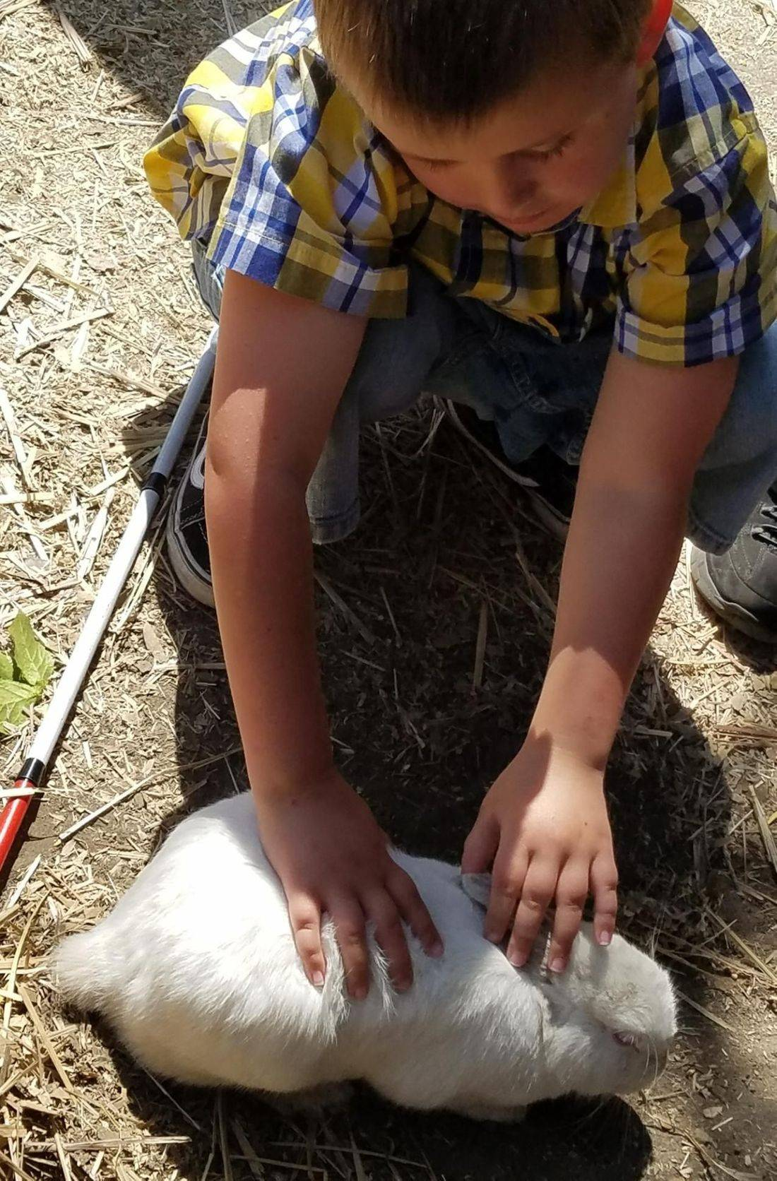 Blind child, sensory experience, petting live bunny