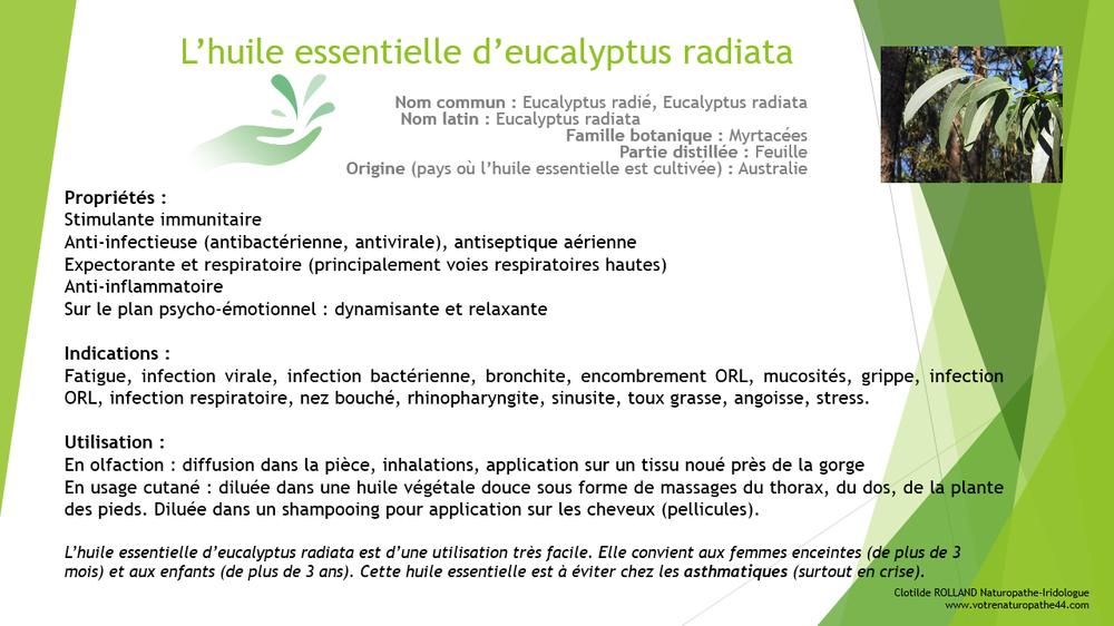 huile essentielle eucalyptus radiata fiche pratique naturopathie santé bienêtre