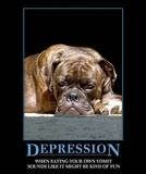 reiki healing depression dogs cats small or large animals