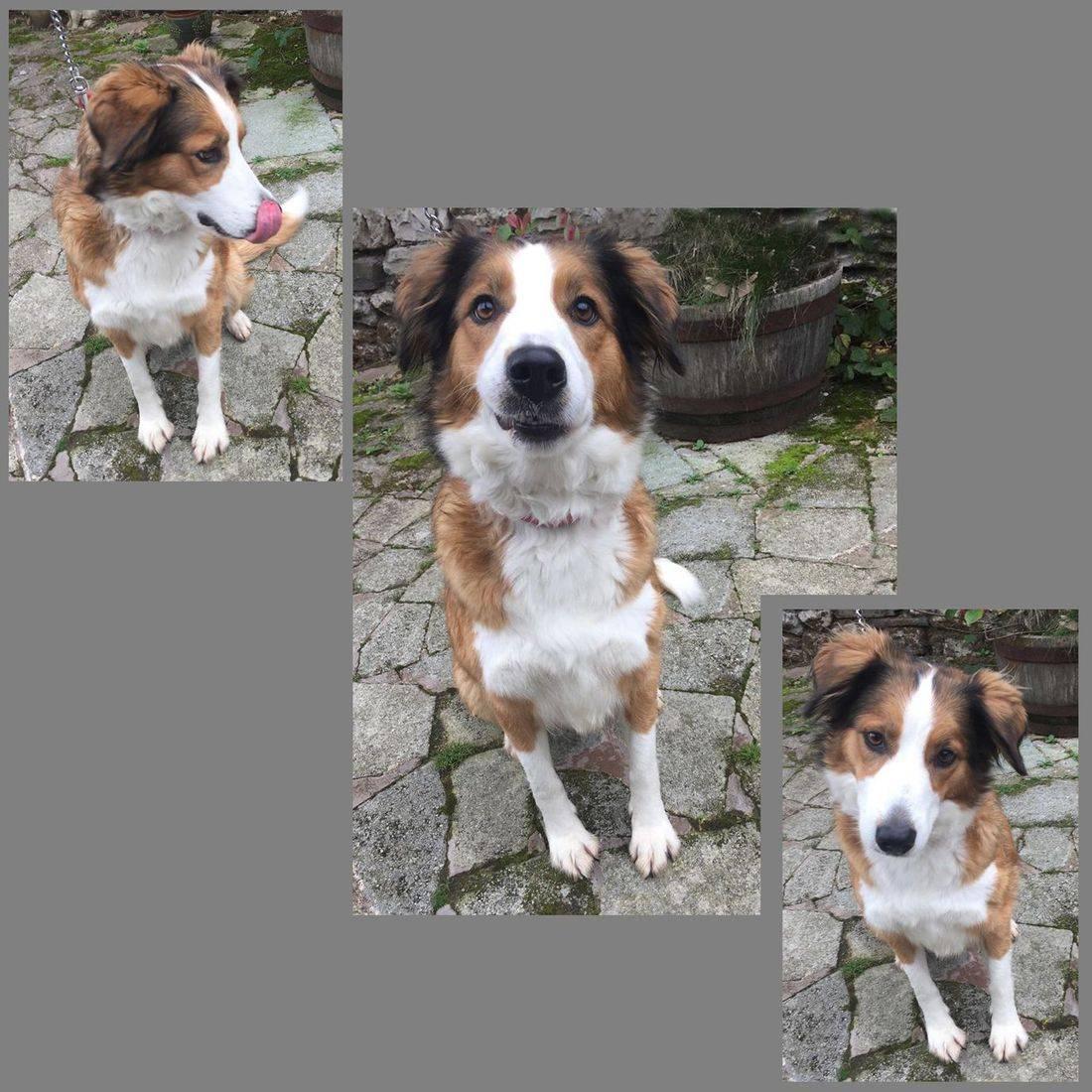 A rescue dog by Dog Samaritans