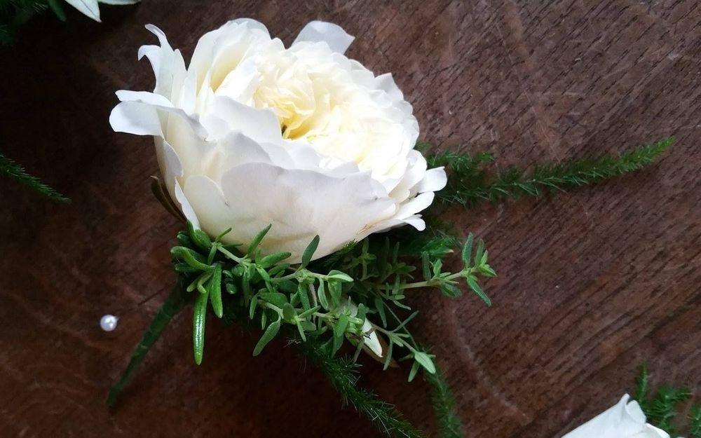 David Austin rose herb buttonhole