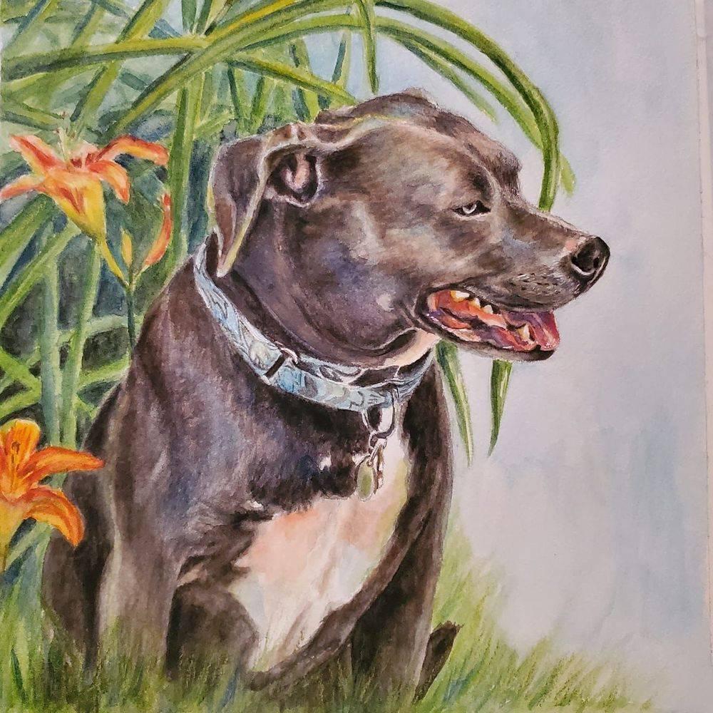 dog, pets, pet portrait
