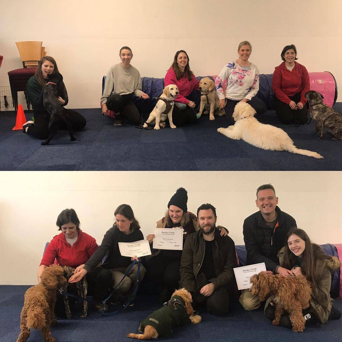 Group dog training amershamam