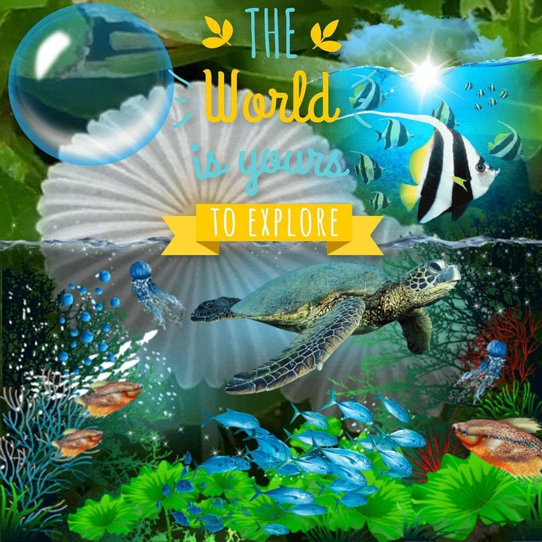 Various marine animals