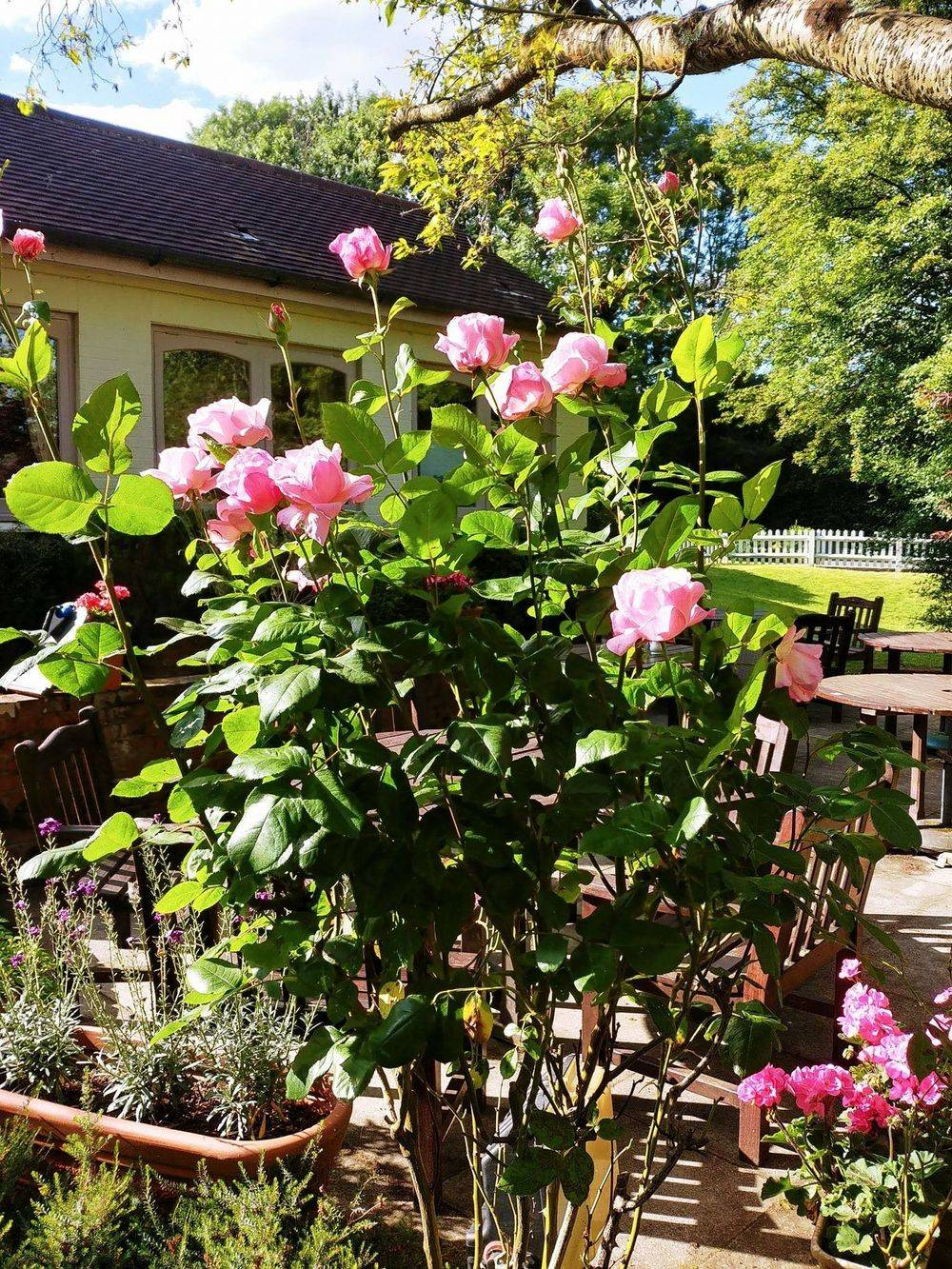 english roses , traditional english steak and kidney pie ,  english pub food , cosy country pubs, fireplace , grandfather clock , old english pubs , vintage inns united kingdom , british & far east traders , friars oak pub hassocks , sussex country pubs, best english pubs