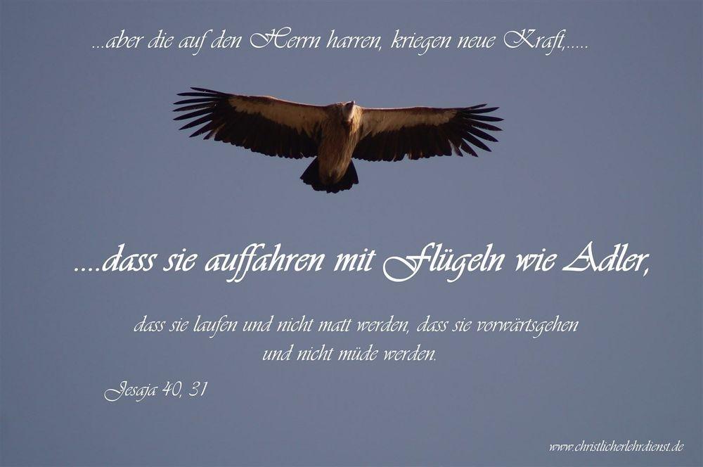 """Fliegen wie ein Adler """"..aber die auf den Herrn harren, kriegen neue Kraft, dass sie auffahren mit Flügeln wie Adler, dass sie laufen und nicht matt werden, dass sie vorwärts gehen und nicht müde werden."""" Jesaja 40, 31"""