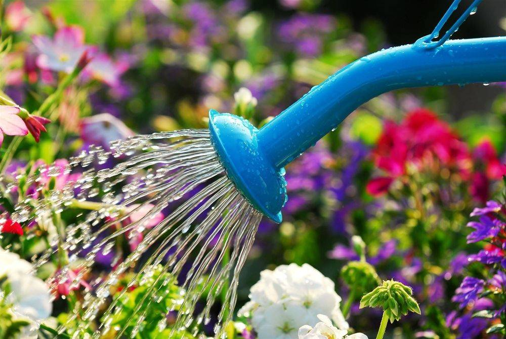 Property and Garden Care service offer watering of Vegetable Gardens