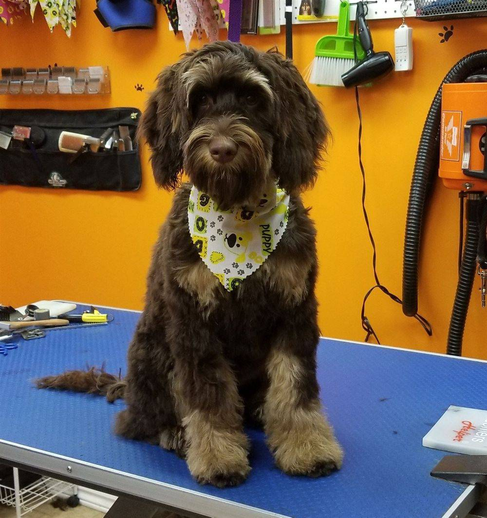 Getting the bandana and bows organized. High velocity dryer. Petstyles Plus