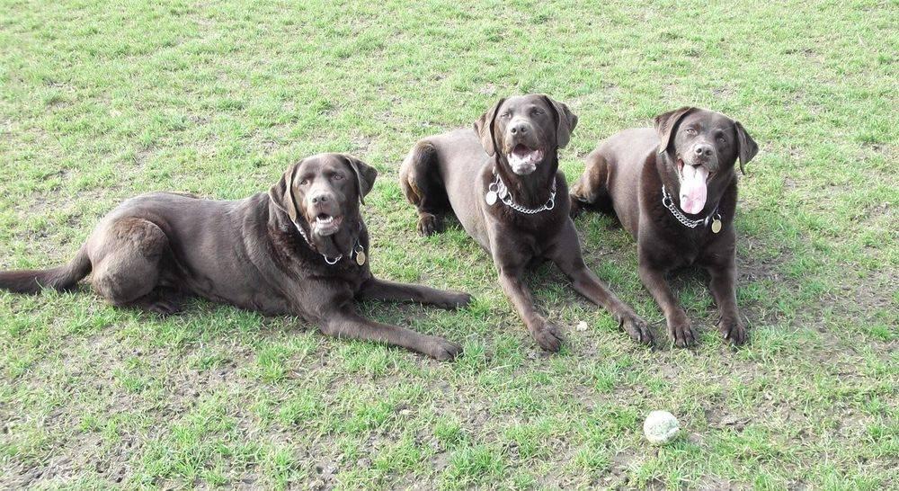 The Dog Hub. Dog training in the London Borough of Camden.