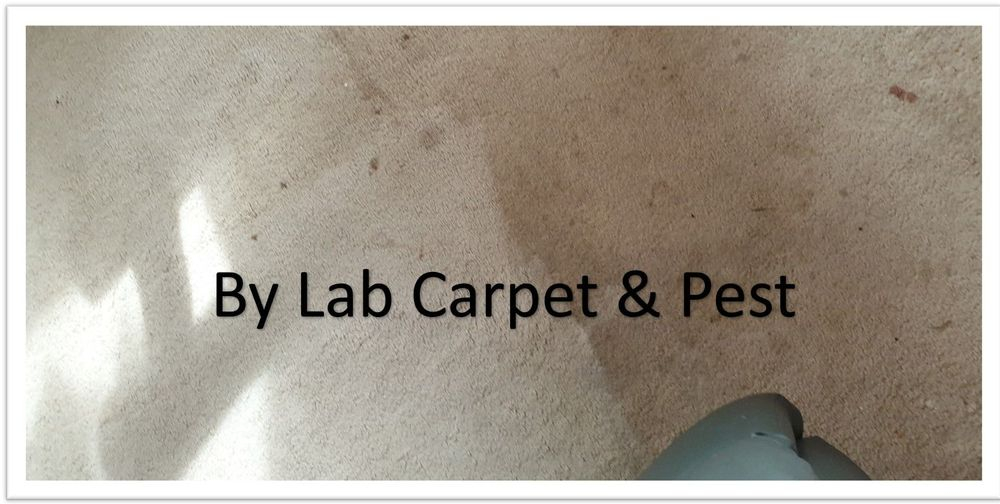 By Lab Carpet and Pest Gympie