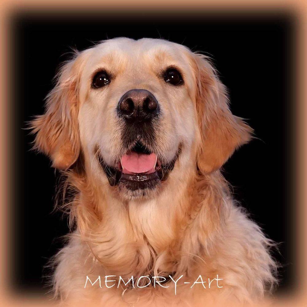 In de Studio bij MEMORY-Art, de huisdierfotograaf