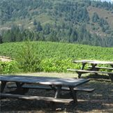 See views like this with Napa Sonoma Wine Tasting Driver