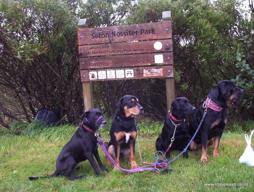 Johnsonville Dog Walker - Dogs at Lawsons Track, Seton Nossiter Park, Newlands / Woodrigdge end
