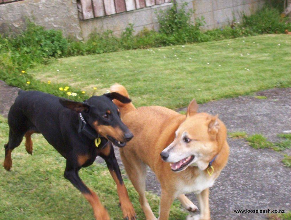 Doggie Play Date, you're It !