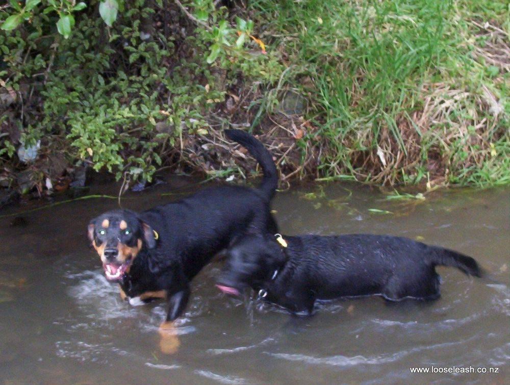 DogWalkingKhandallahParkSN 0971